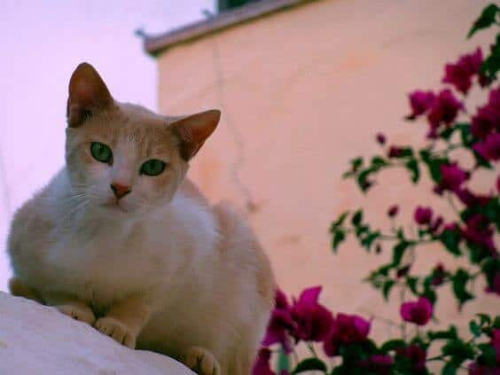 Loukia Studios and Suites Kini Syros - syros cat