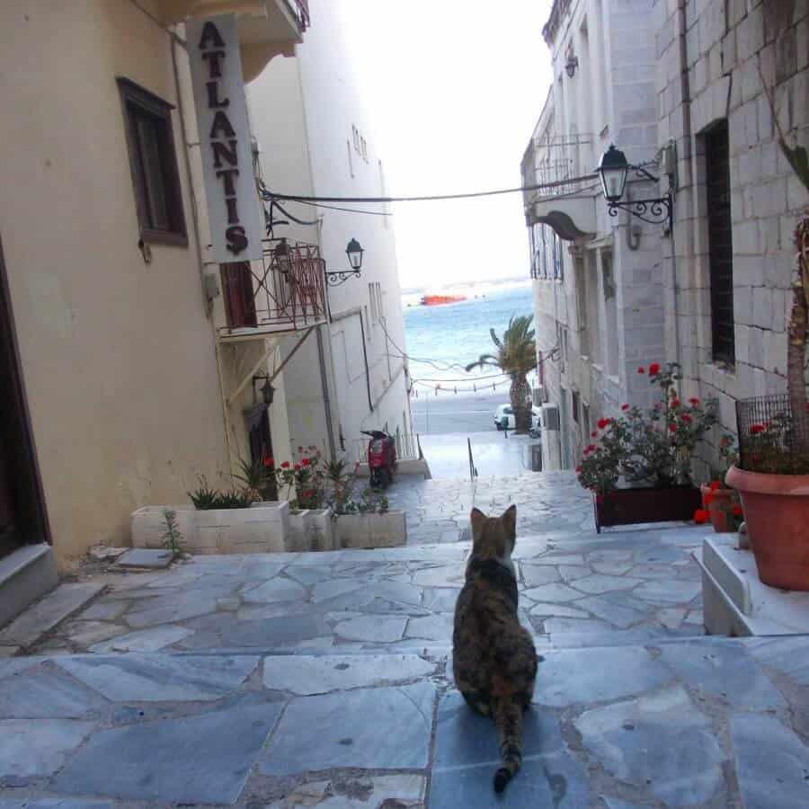 Loukia Studios and Suites Kini Syros - Ermoupoli cat